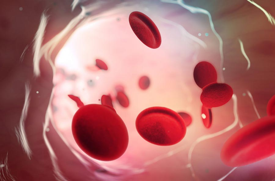 red blood cell 1